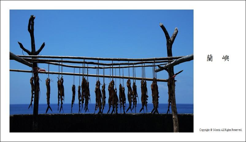 飛魚季 (05)