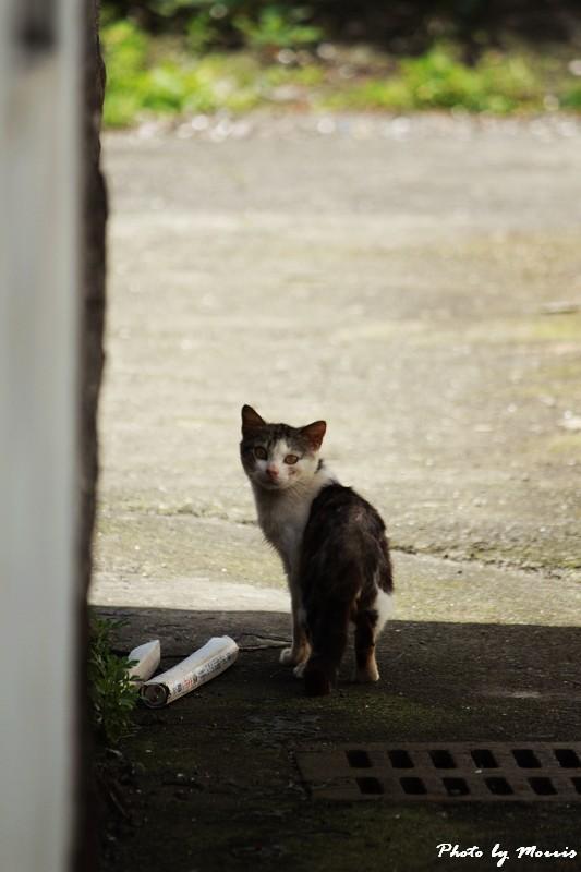 馬崗漁港拍貓看海 (47)