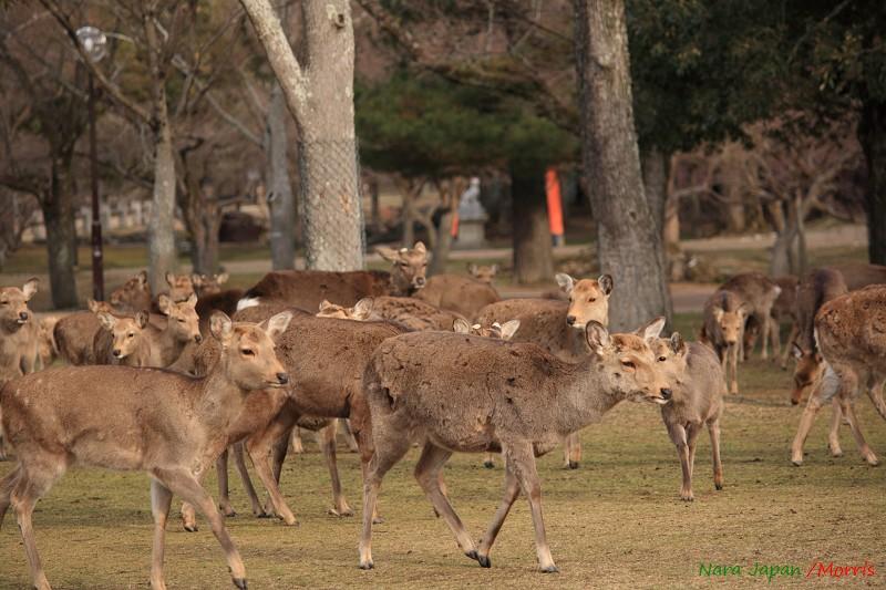 奈良 鹿寄 (07)