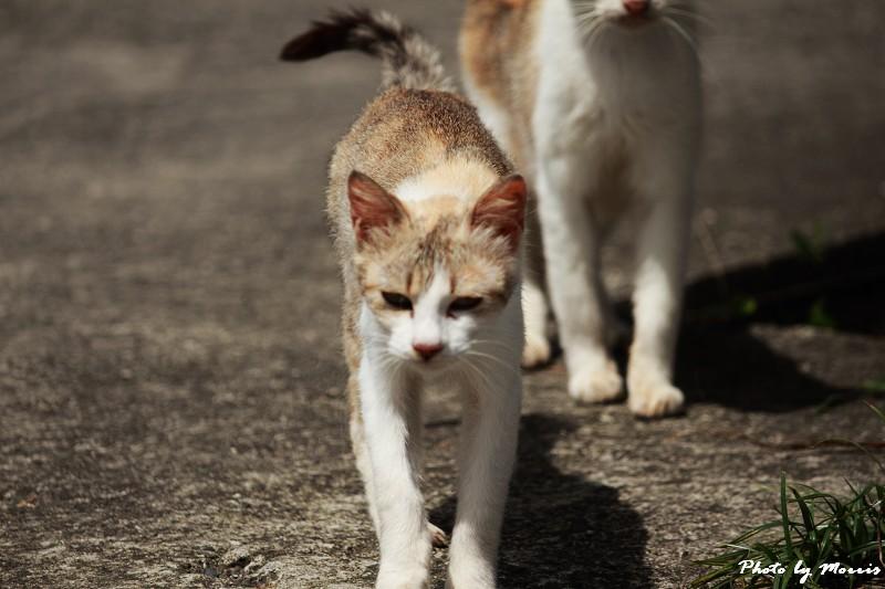 馬崗漁港拍貓看海 (37)