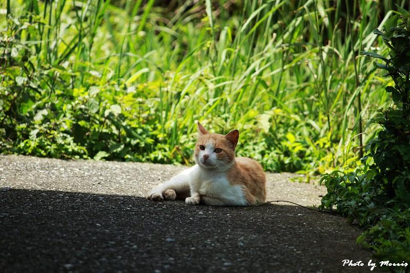 馬崗漁港拍貓看海 (57)
