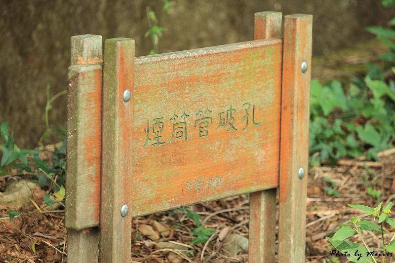 藤山步道賞桐趣 (30)