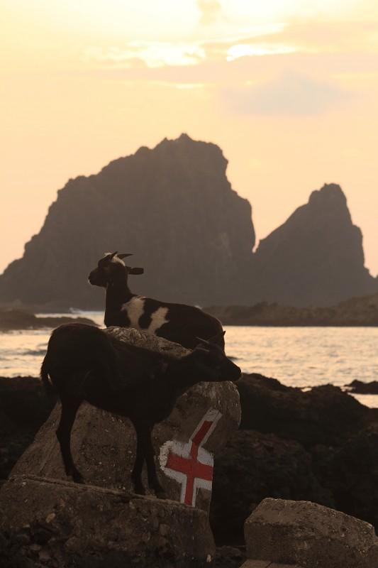 山羊的國度 (29)