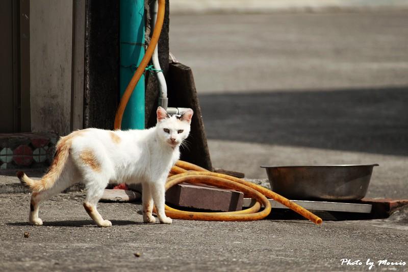 馬崗漁港拍貓看海 (09)
