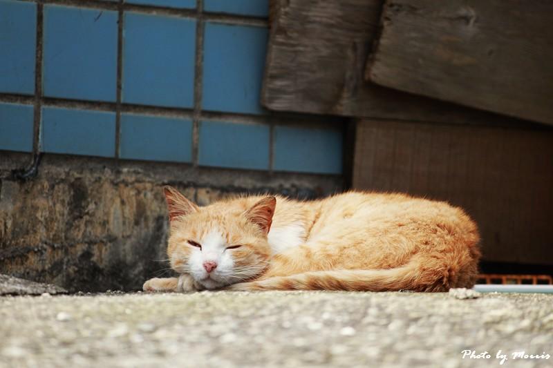 馬崗漁港拍貓看海 (07)