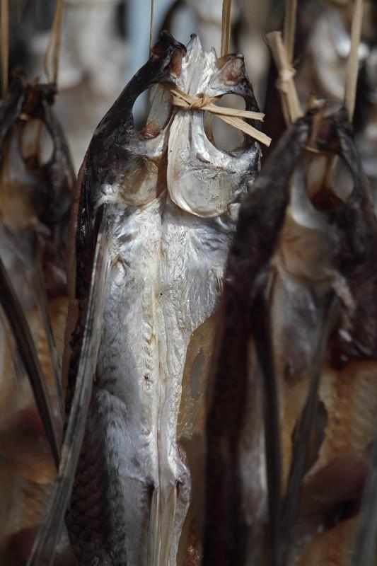 飛魚季 (36)