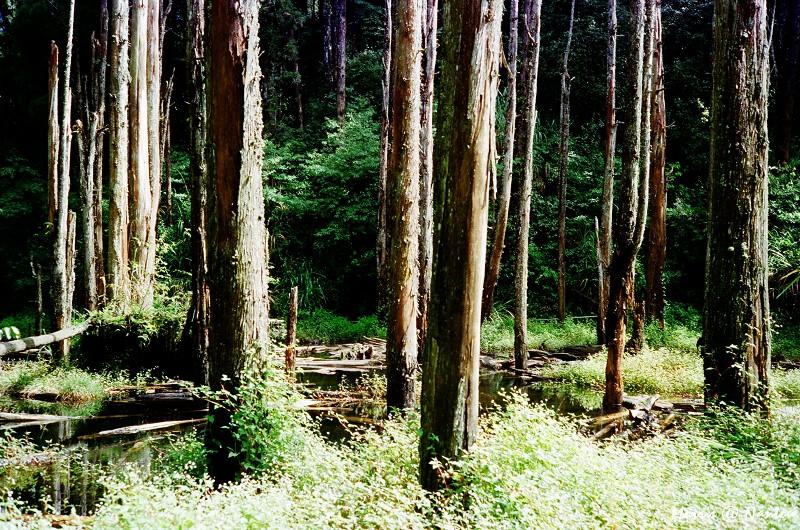 忘憂森林 (8)
