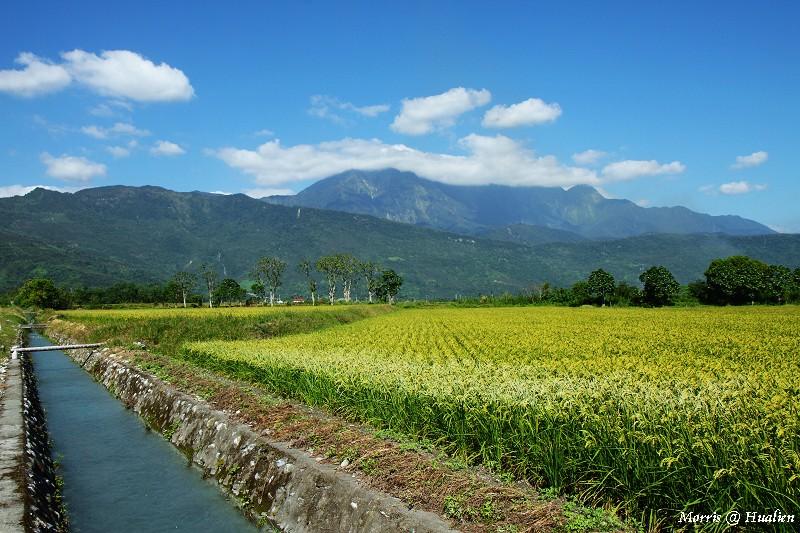花東縱谷的稻香味 (48)