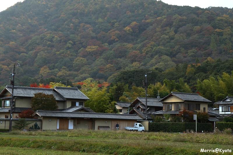 嵐山 (12)