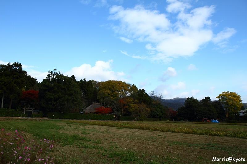 嵐山 (14)