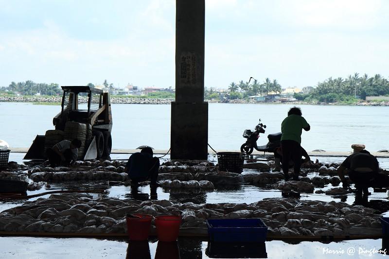 漫遊東港漁港&漁市 (5)