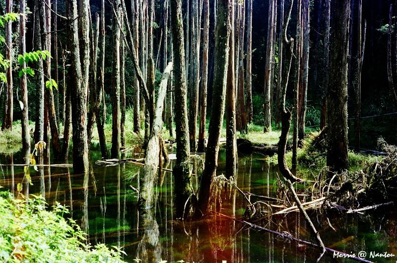 忘憂森林 (1)