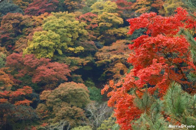 嵐山 (54)