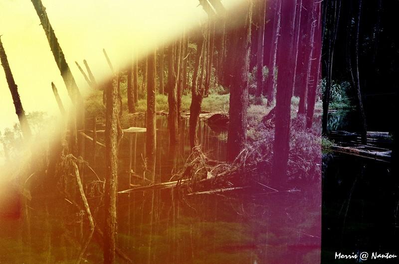 忘憂森林 (38)