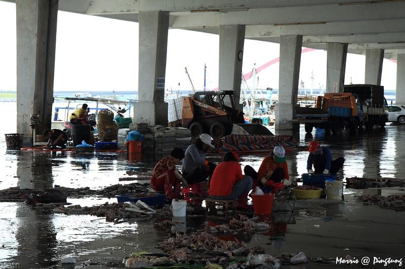 漫遊東港漁港&漁市 (6)