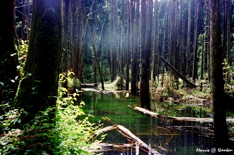 忘憂森林 (10)