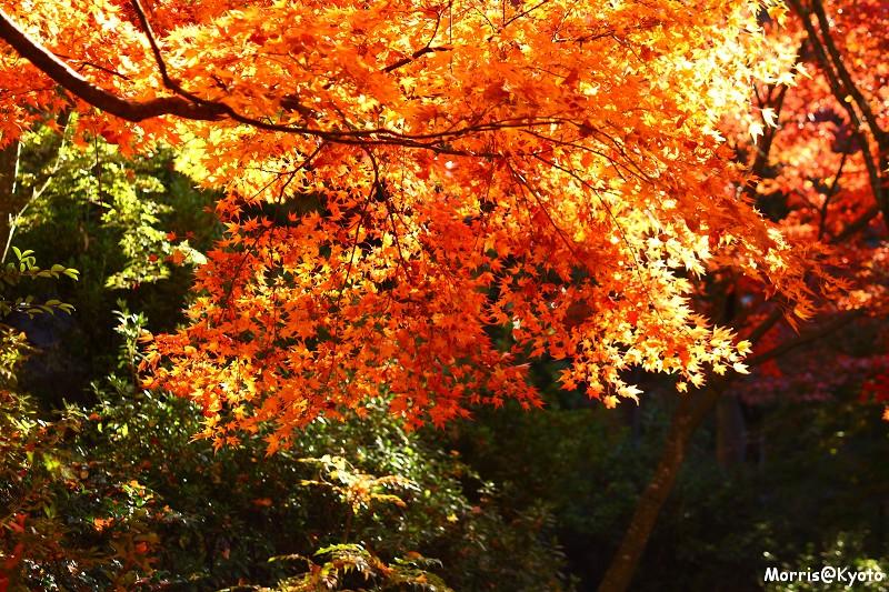 東福寺 (55)