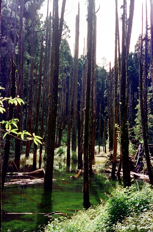 忘憂森林 (2)