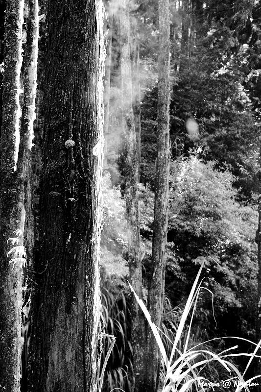 晴空‧忘憂森林 (4)