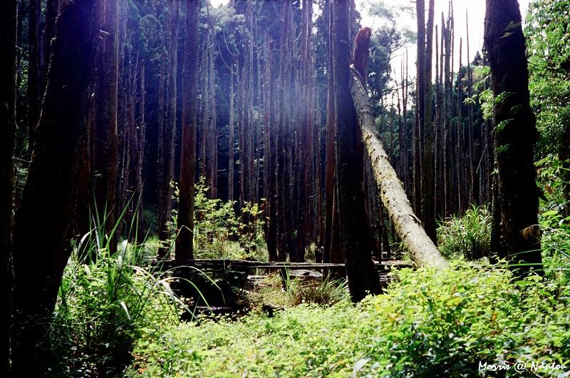 忘憂森林 (12)