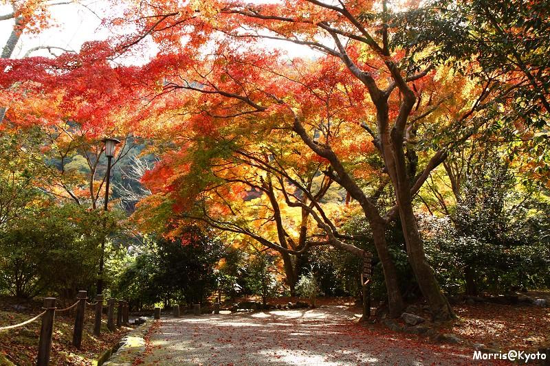 嵐山 (43)