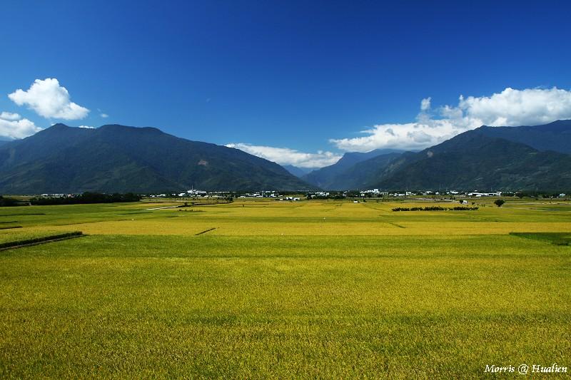 花東縱谷的稻香味 (20)