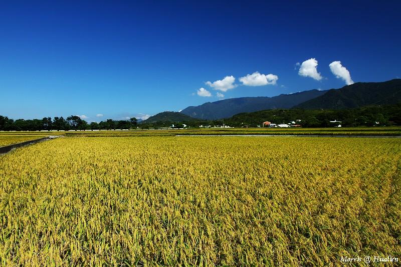 花東縱谷的稻香味 (31)