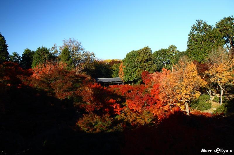 東福寺 (18)