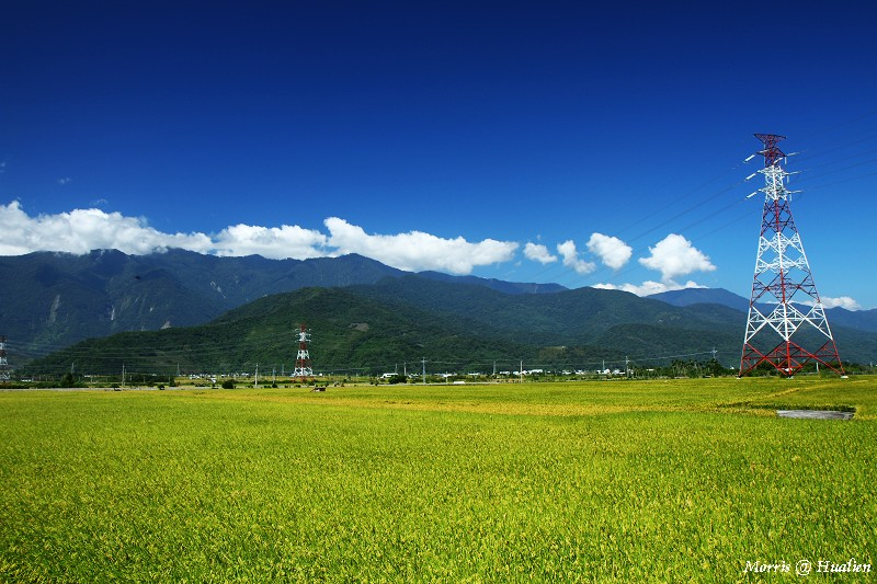 花東縱谷的稻香味 (10)