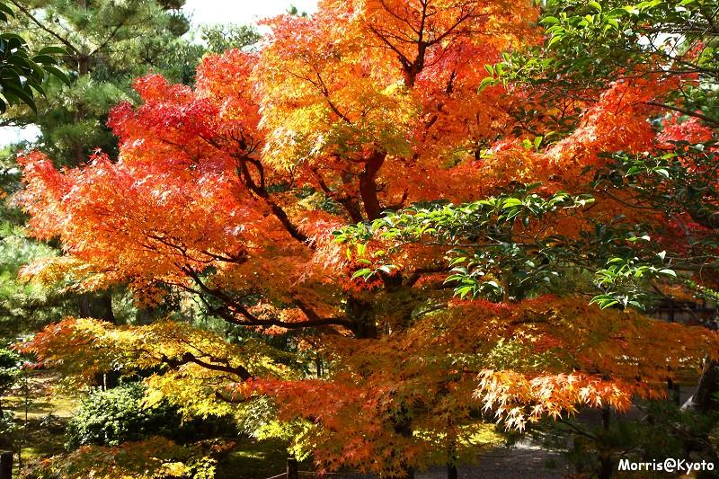 嵐山 (5)