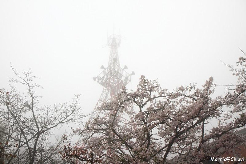 2011 阿里山櫻花季 (56)