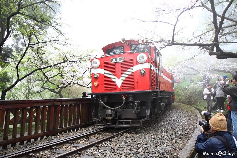 2011 阿里山櫻花季 (117)