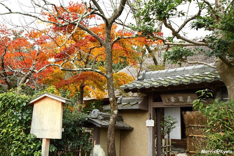 嵐山 (13)