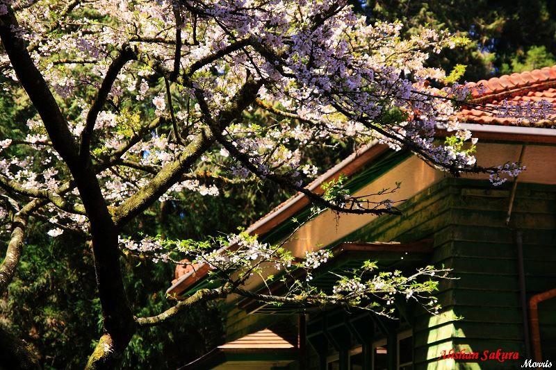 日式房舍 (1)