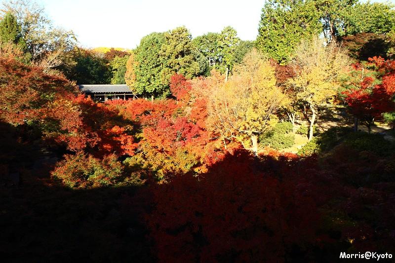 東福寺 (16)