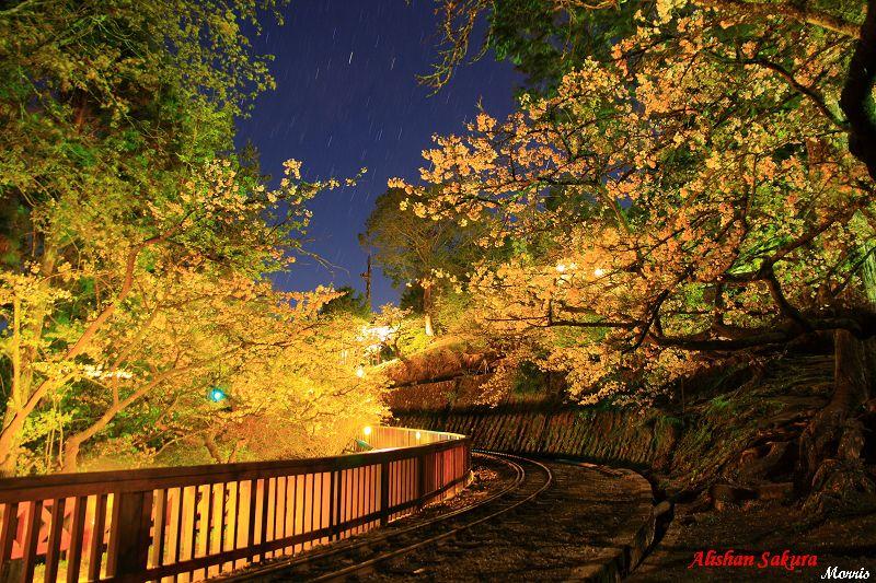 夜櫻 (2)