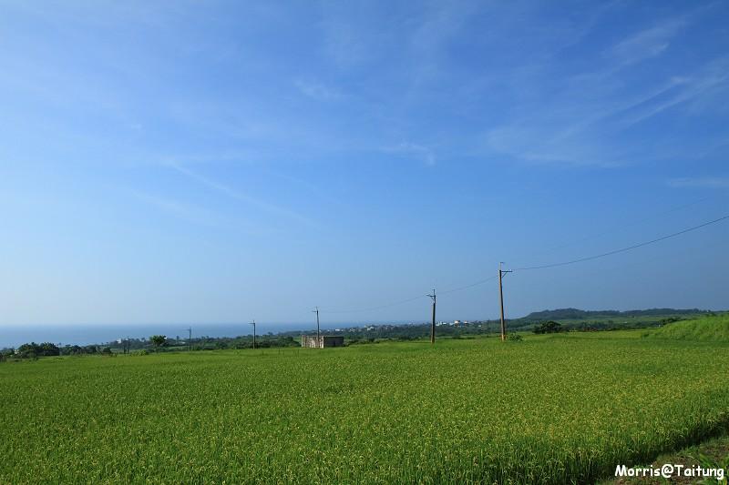 長濱部落梯田 (74)