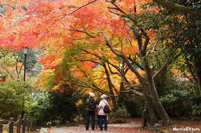嵐山 (40)
