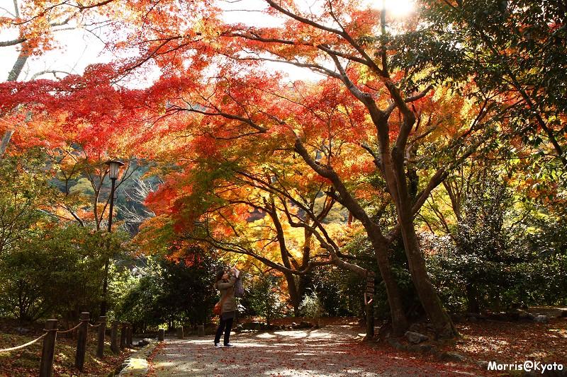 嵐山 (42)
