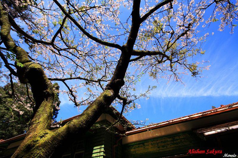 日式房舍 (4)