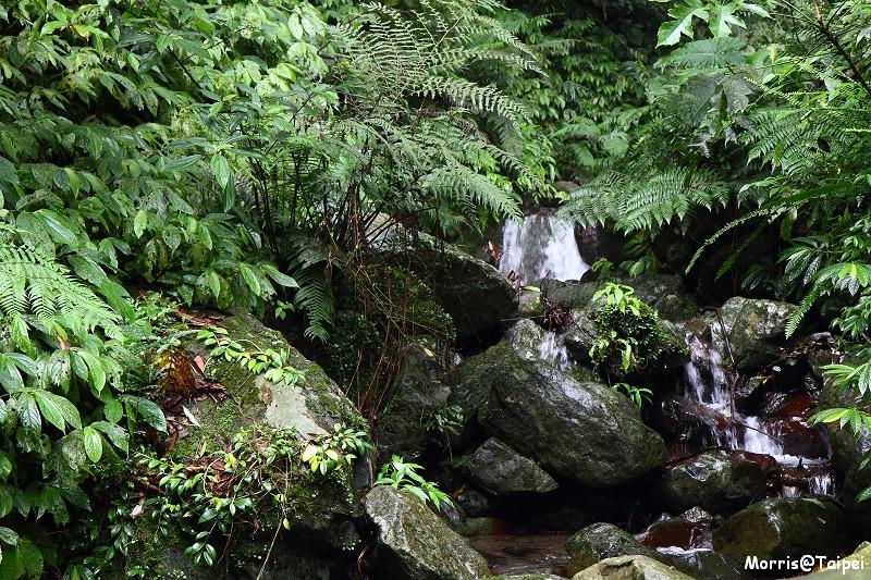 雲森瀑布 (5)