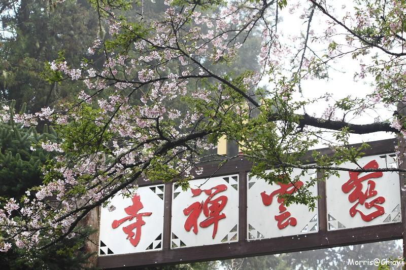 2011 阿里山櫻花季 (151)