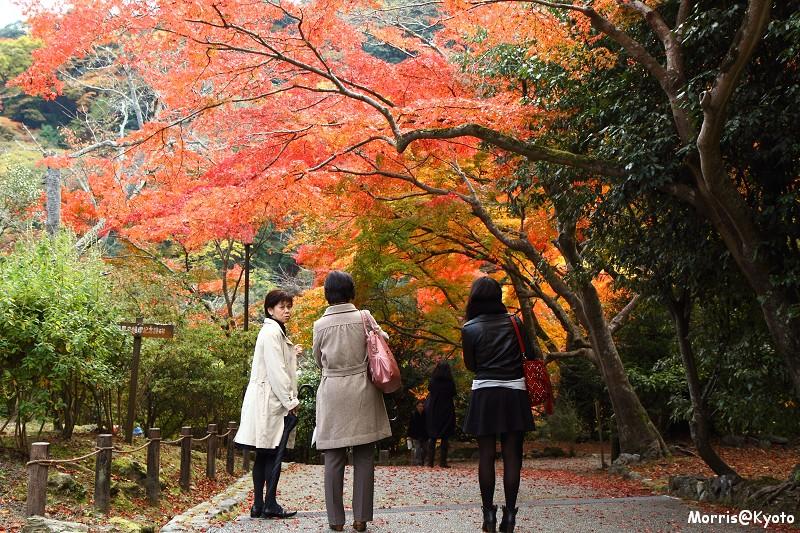 嵐山 (39)