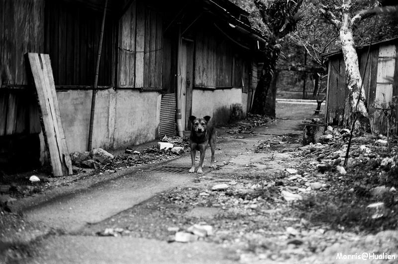 林田山黑白卷 (17)