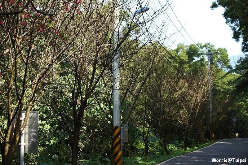 2011 淡水滬尾櫻花大道 (18)