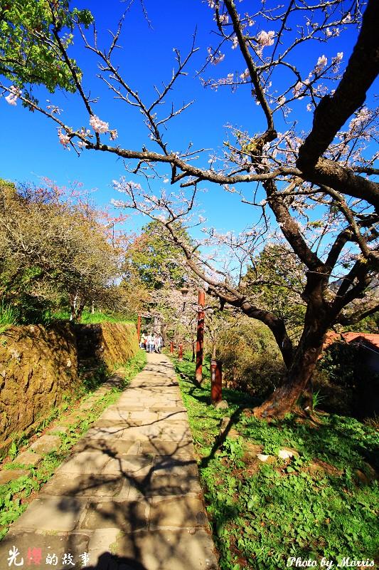 櫻王步道 (1)