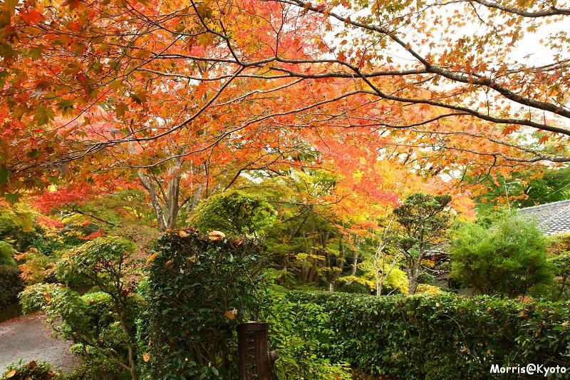 嵐山 (15)