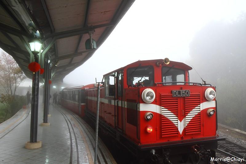 2011 阿里山櫻花季 (21)