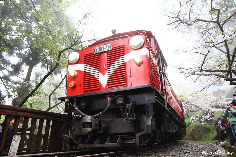 2011 阿里山櫻花季 (121)