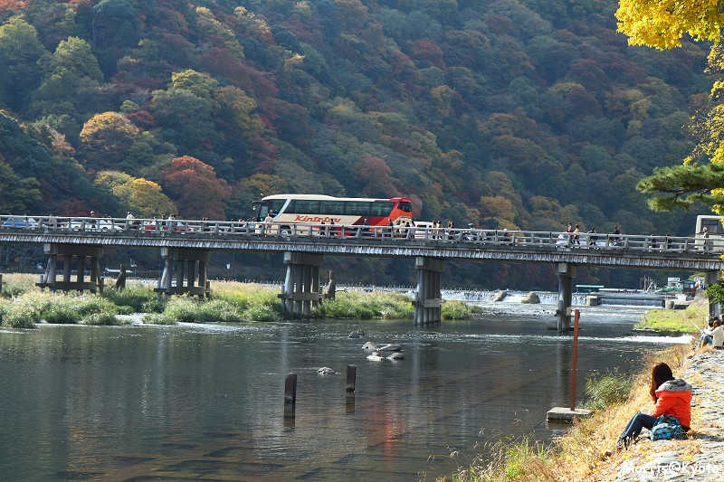 嵐山 (53)